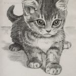 "Nr.03 ""Kätzchen"", 20 x 30 cm, Kohlestift auf Malpapier, 2004"