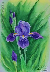 """Nr. 109 """"Iris"""", Aquarell"""