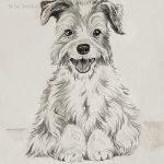 """Nr.13 """"Malteser Hund"""", 30 x 40 cm, Kohlezeichnung, 2004"""