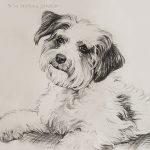 """Nr.14 """"Chinesischer Schopfhund – Powderpuff Schlag"""", 40 x 30 cm, Kohlezeichnung, 2010"""
