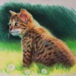 """Nr.171 """"Kätzchen auf der Wiese"""", 40 x 30 cm, Pastell auf Velourpapier, 2014"""