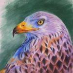 """Nr.67 """"Falke"""", Pastell auf Velourpapier, 30 x 40 cm"""