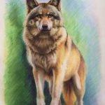 """Nr.81 """"Wolf"""", 30 x 40 cm, Pastell auf Velourpapier, 2008"""