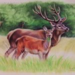 """Nr.84 """"Hirsche"""", 40 x 30 cm, Pastell Auf Velourpapier, 2009"""